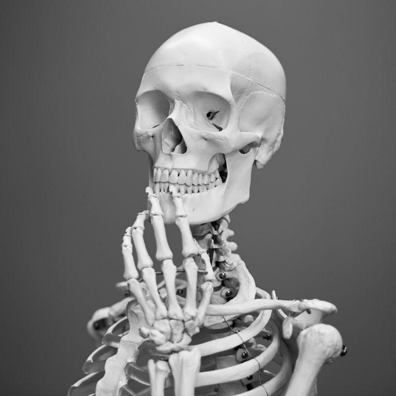 人体の骨標本
